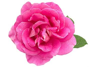 Продукти с Българска роза